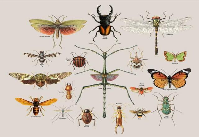 Từ vựng tiếng Hàn chủ đề các loài sâu, bọ
