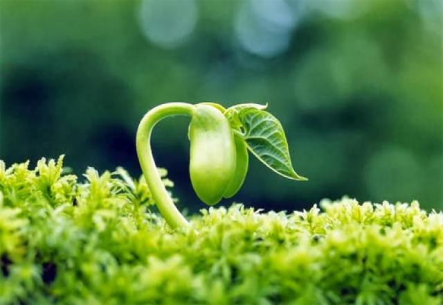 Học từ vựng tiếng Hàn chủ đề thiên nhiên, môi trường